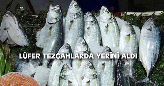 LÜFER TEZGAHLARDA YERİNİ ALDI